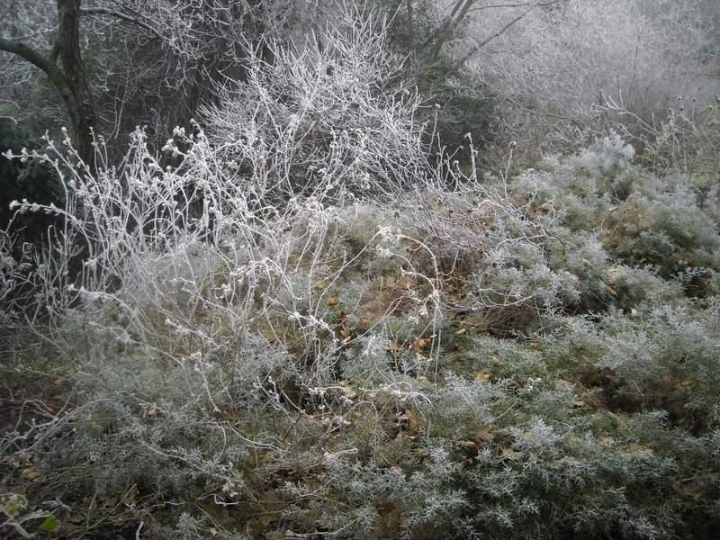 2012 gennaio fotodiario2