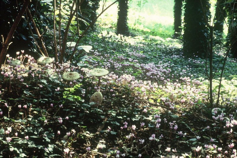 Bosco giardino