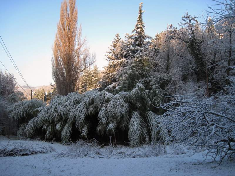 dicembre 2010 - fotodiario5