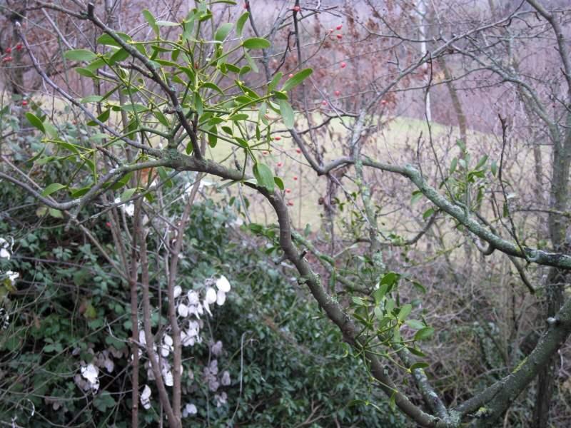 dicembre 2010 - fotodiario8