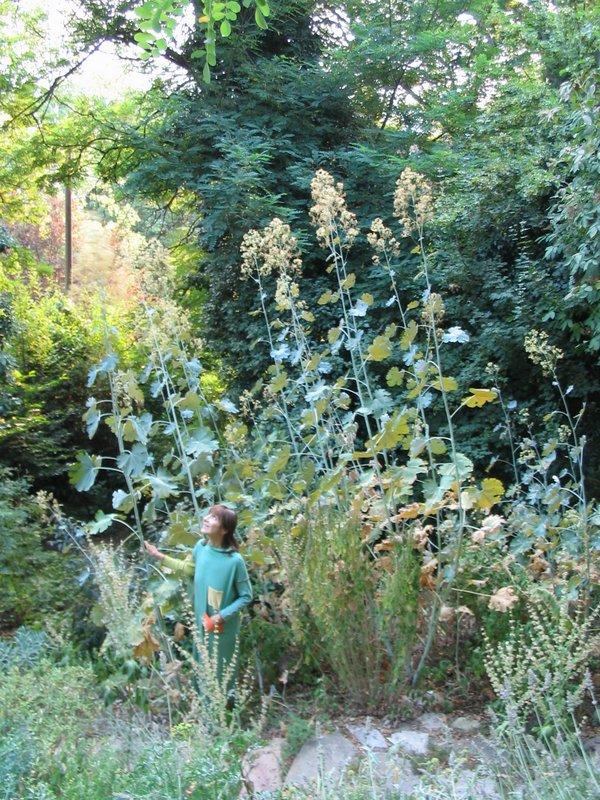 Giardino delle erbe